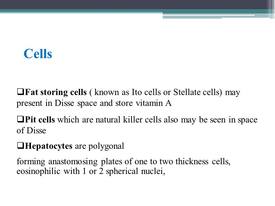Cells Fat storing cells ( known as Ito cells or Stellate cells) may present in Disse space and store vitamin A.