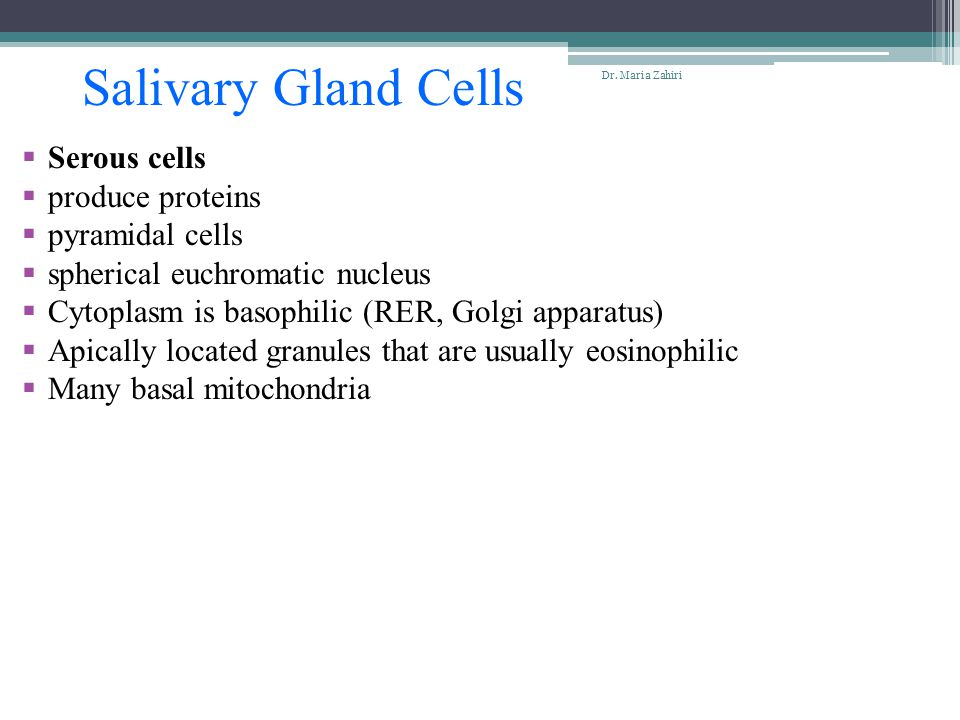 Salivary Gland Cells Serous cells produce proteins pyramidal cells