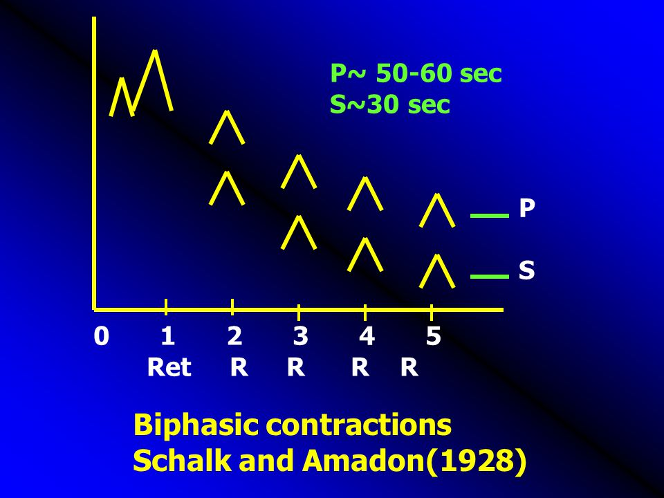Biphasic contractions Schalk and Amadon(1928)