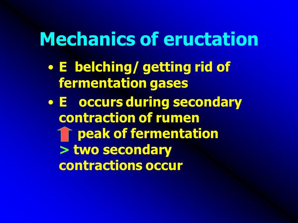 Mechanics of eructation