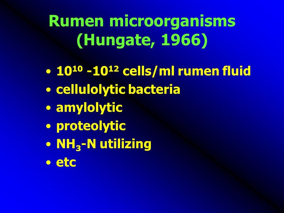 Rumen microorganisms (Hungate, 1966)