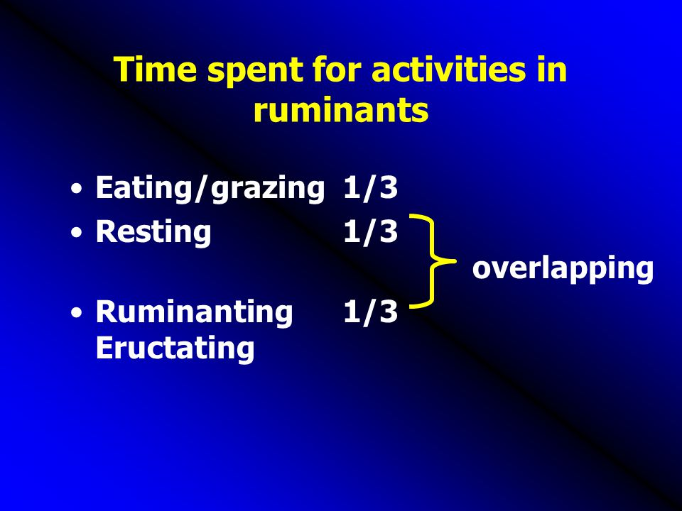 Time spent for activities in ruminants