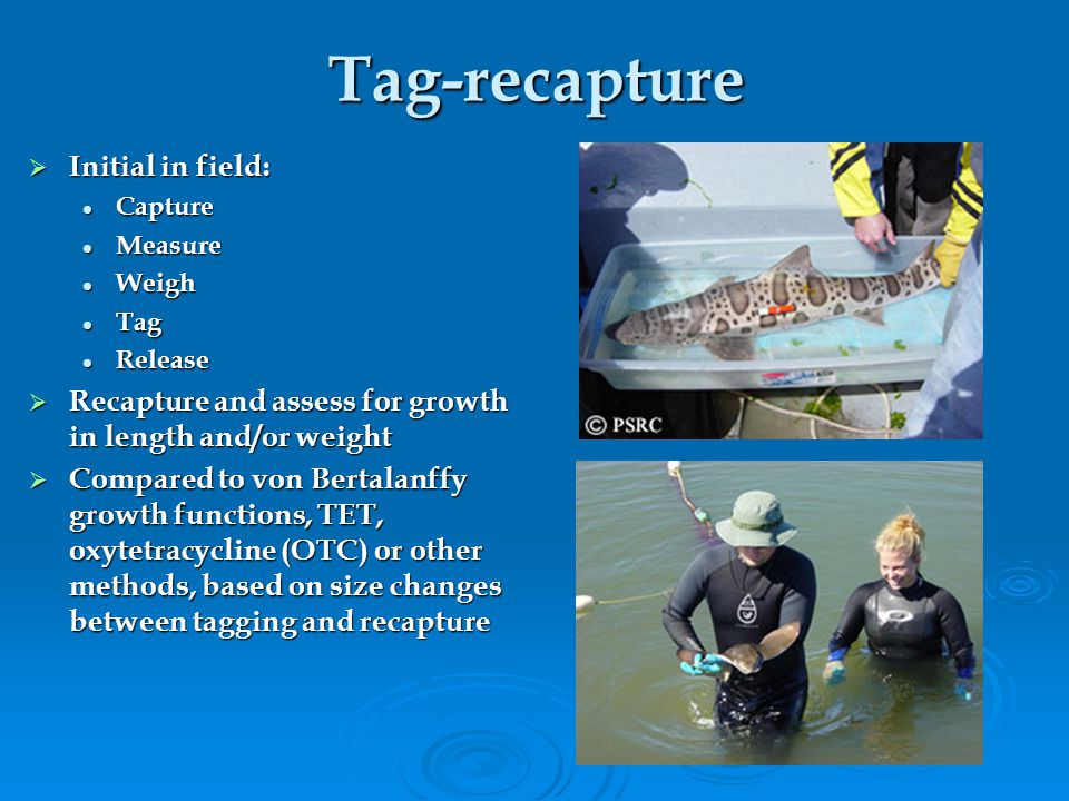 Tag-recapture Initial in field: