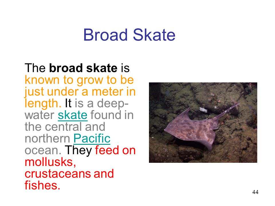 Broad Skate