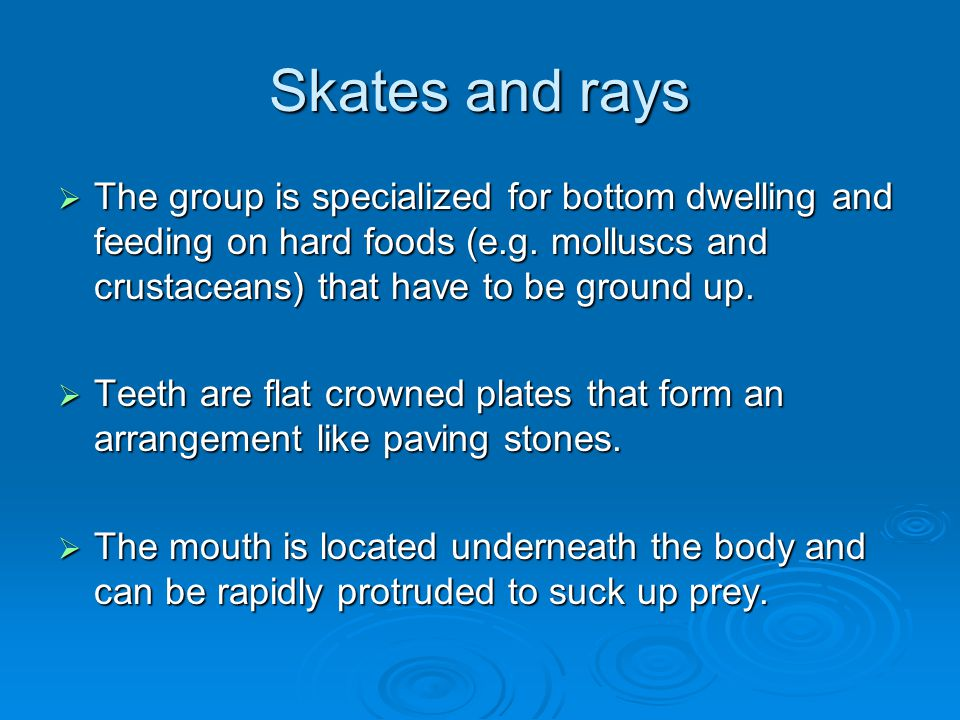 Skates and rays The group is specialized for bottom dwelling and feeding on hard foods (e.g. molluscs and crustaceans) that have to be ground up.