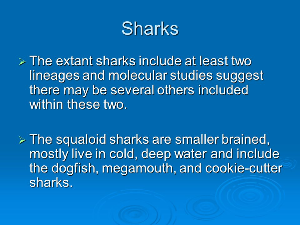 Sharks The extant sharks include at least two lineages and molecular studies suggest there may be several others included within these two.
