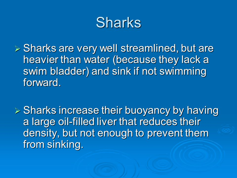 Sharks Sharks are very well streamlined, but are heavier than water (because they lack a swim bladder) and sink if not swimming forward.