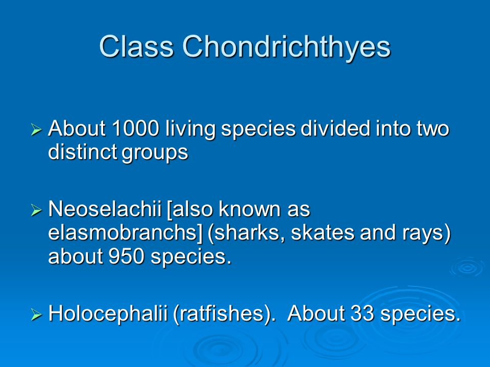 Class Chondrichthyes About 1000 living species divided into two distinct groups.