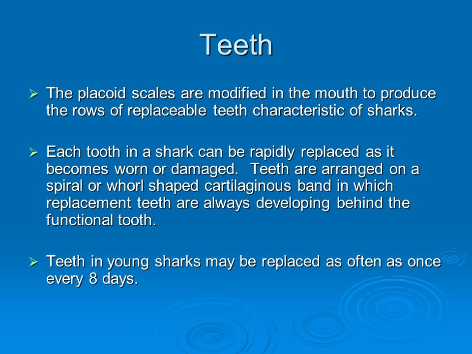 Teeth The placoid scales are modified in the mouth to produce the rows of replaceable teeth characteristic of sharks.