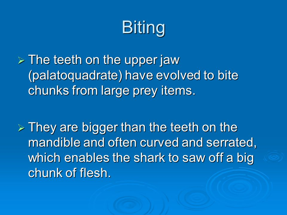 Biting The teeth on the upper jaw (palatoquadrate) have evolved to bite chunks from large prey items.