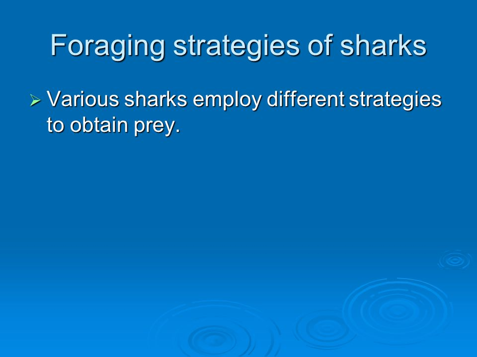 Foraging strategies of sharks