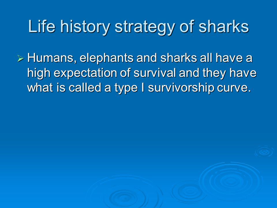 Life history strategy of sharks