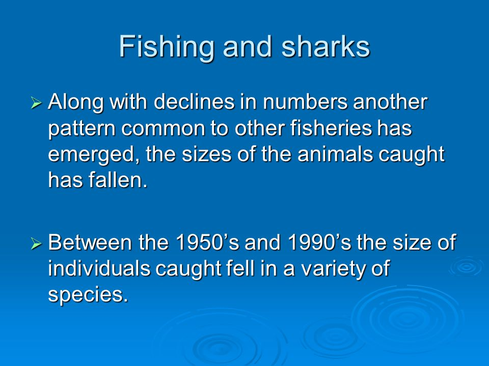Fishing and sharks Along with declines in numbers another pattern common to other fisheries has emerged, the sizes of the animals caught has fallen.