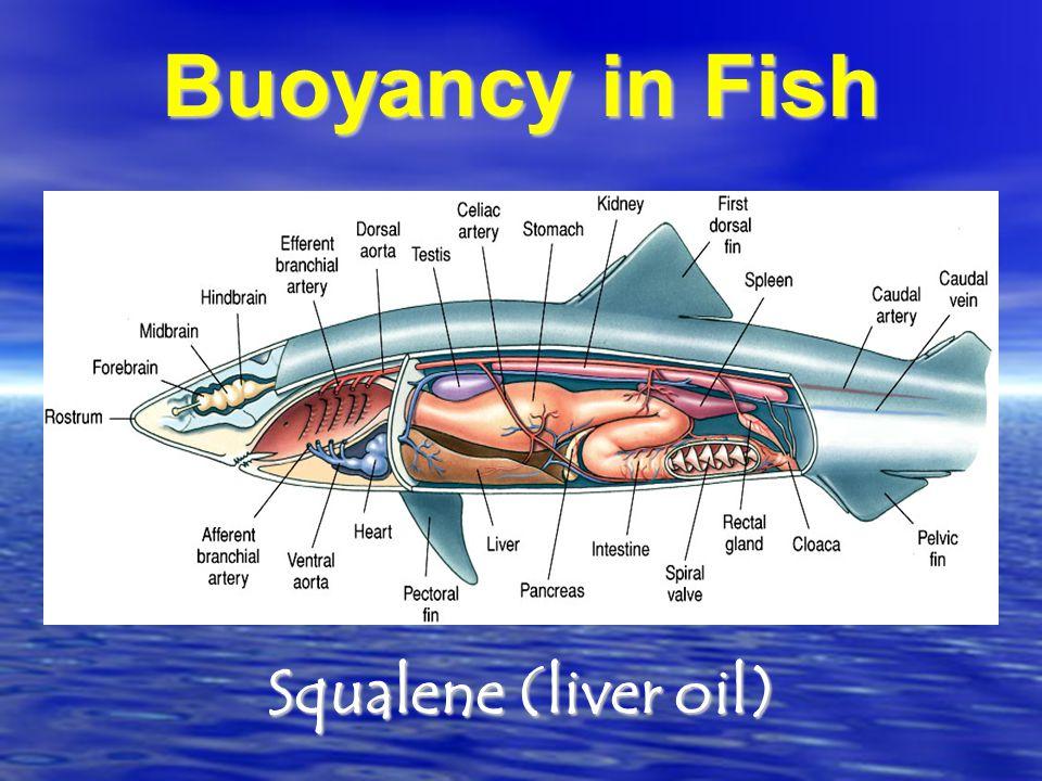 Buoyancy in Fish Squalene (liver oil)