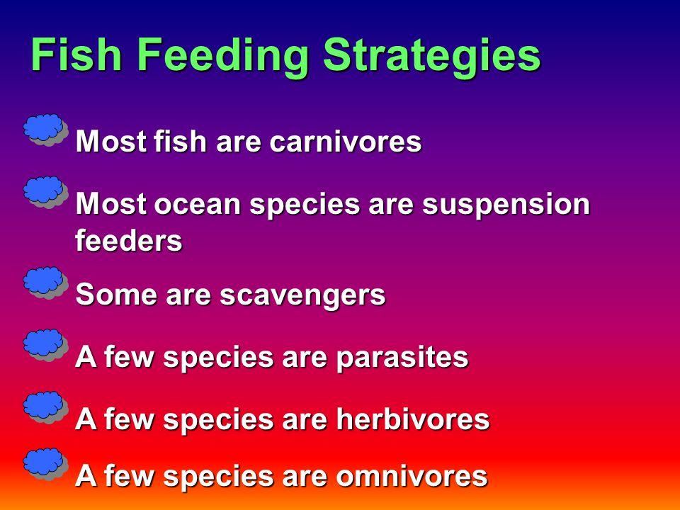 Fish Feeding Strategies