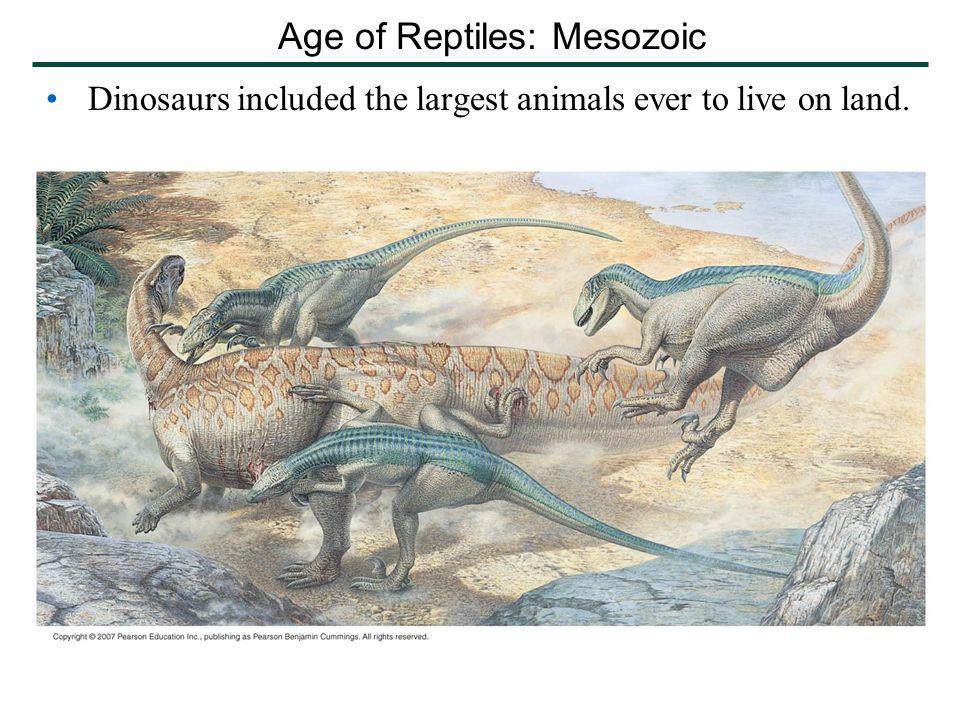 Age of Reptiles: Mesozoic