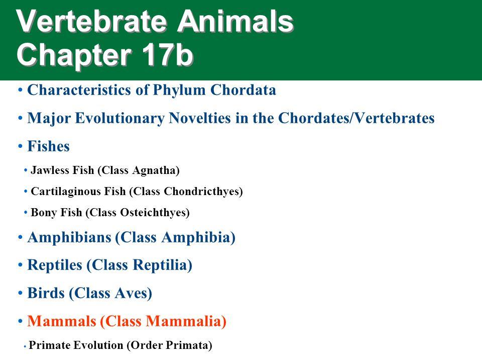 Vertebrate Animals Chapter 17b