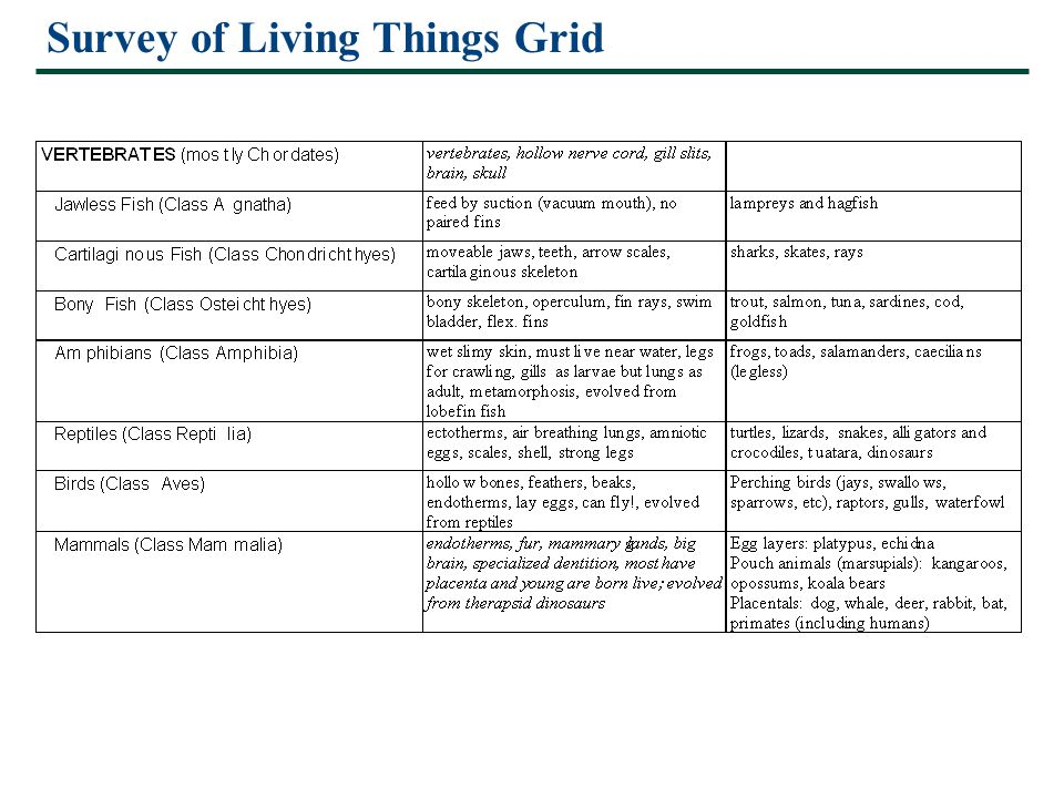 Survey of Living Things Grid