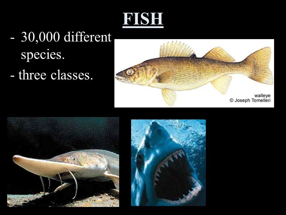FISH 30,000 different species. - three classes.
