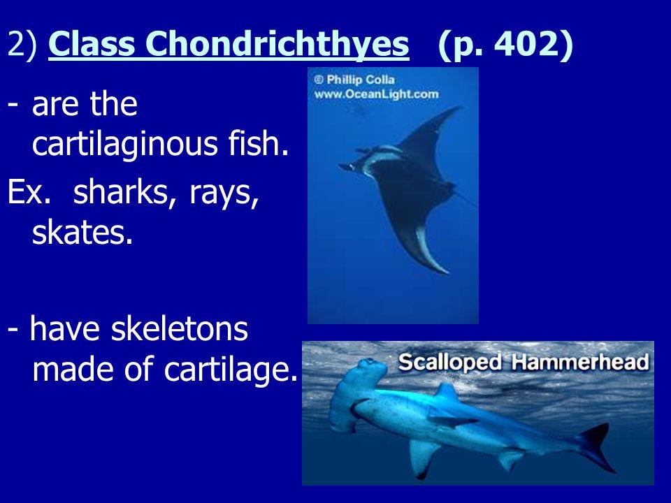 2) Class Chondrichthyes (p. 402)