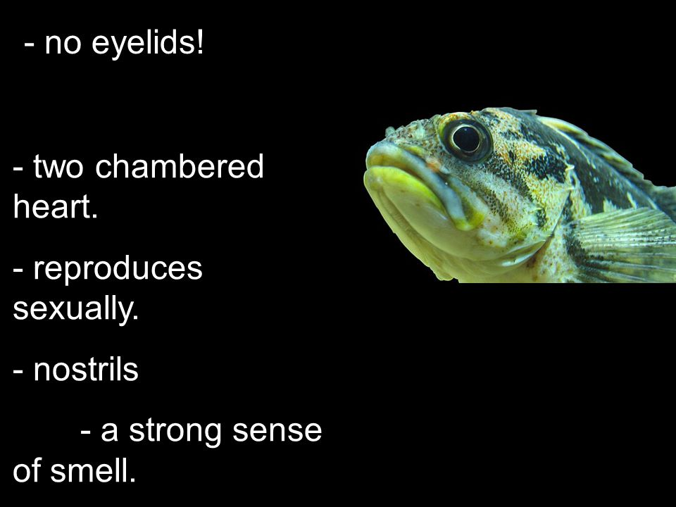 - no eyelids! two chambered heart. reproduces sexually. nostrils - a strong sense of smell.