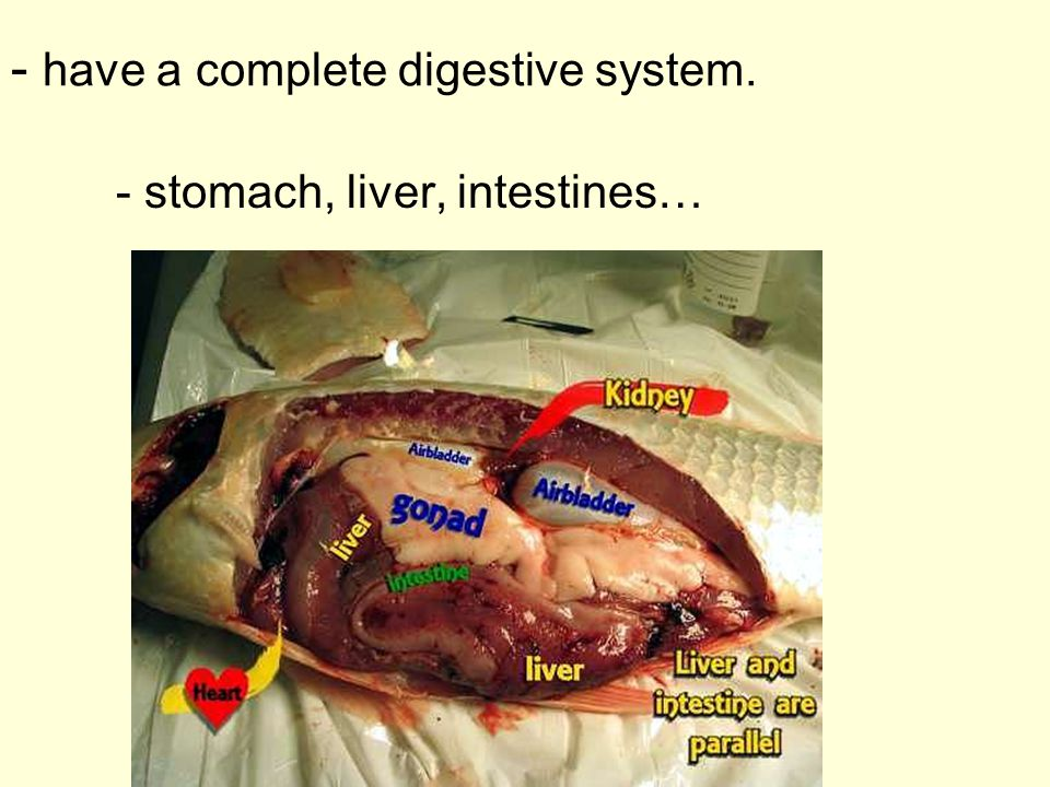 - have a complete digestive system.