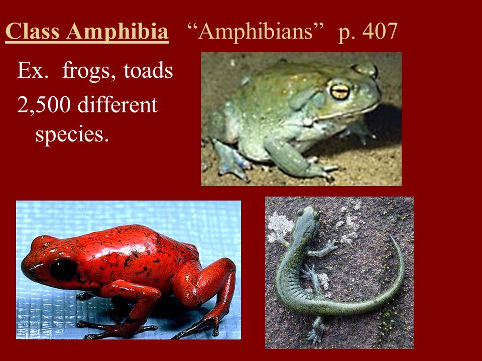 Class Amphibia Amphibians p. 407