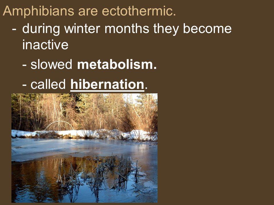 Amphibians are ectothermic.
