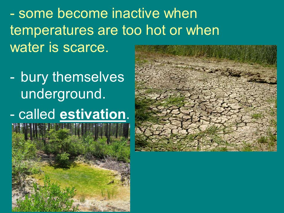 - some become inactive when temperatures are too hot or when water is scarce.