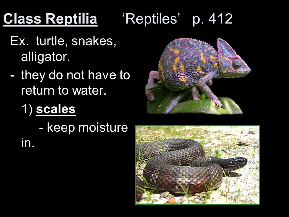 Class Reptilia 'Reptiles' p. 412