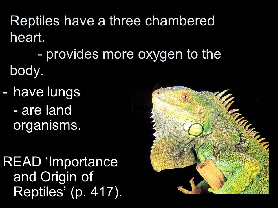 Reptiles have a three chambered heart