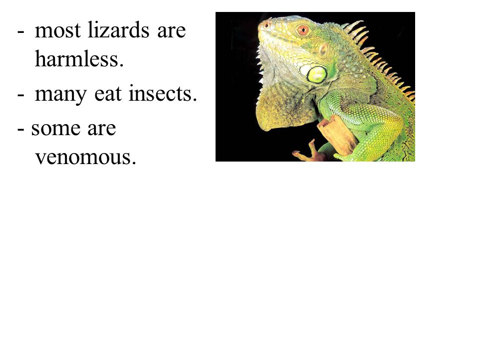 most lizards are harmless.