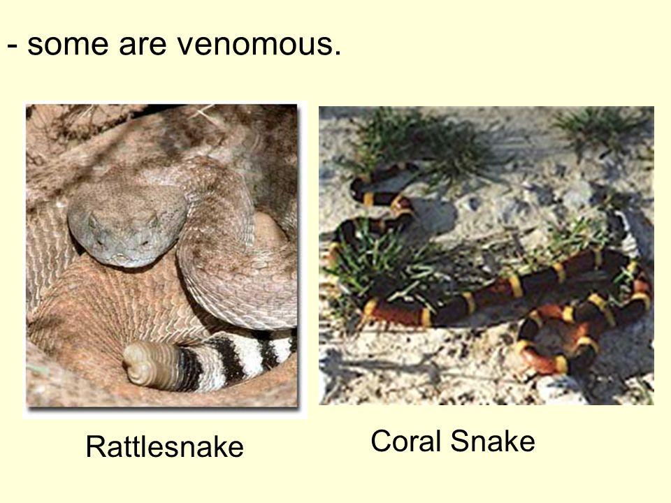 - some are venomous. Coral Snake Rattlesnake