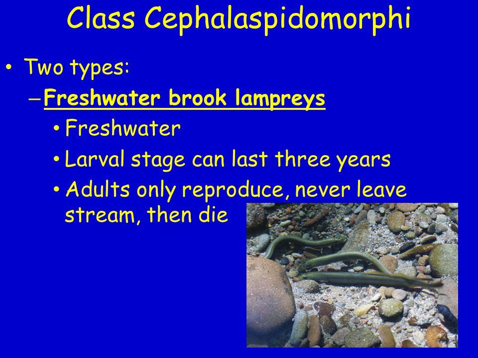 Class Cephalaspidomorphi