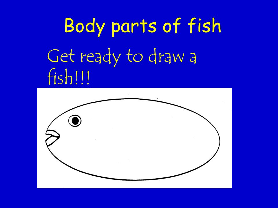 Body parts of fish Get ready to draw a fish!!!