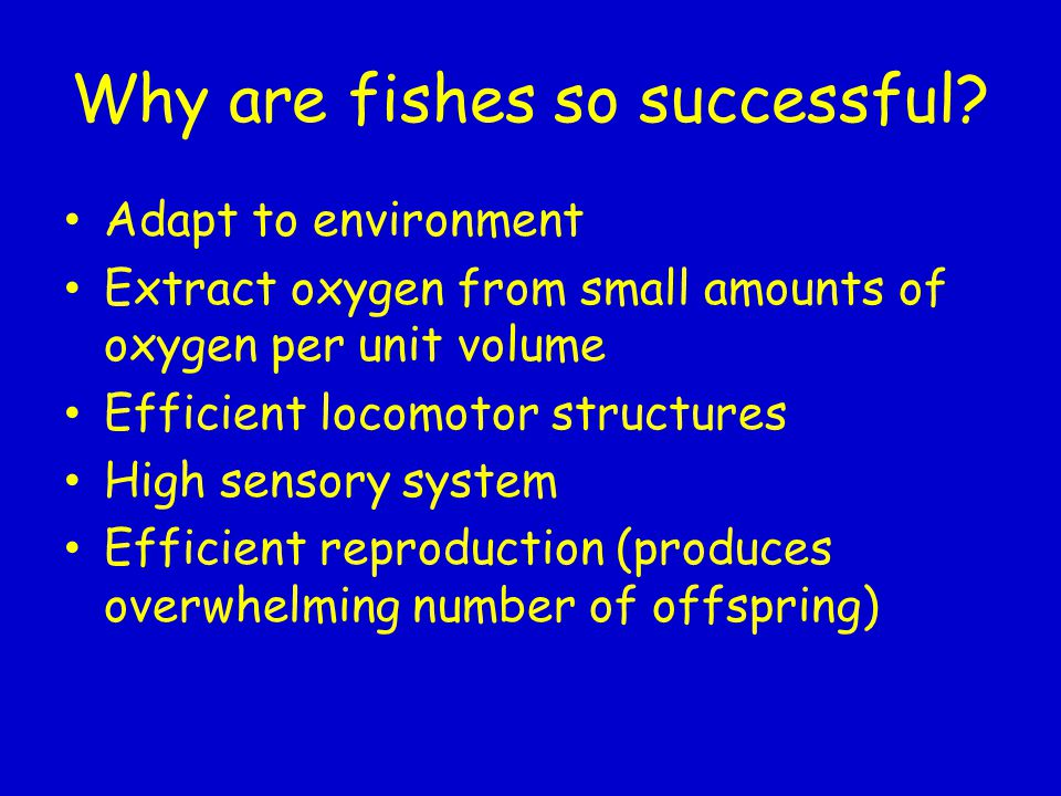 Why are fishes so successful