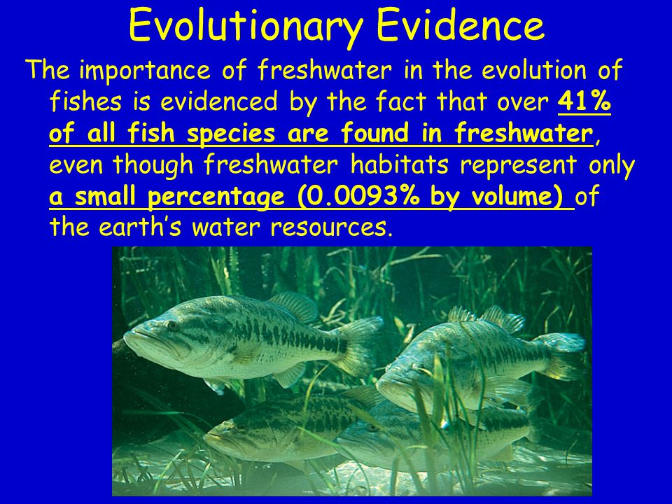 Evolutionary Evidence