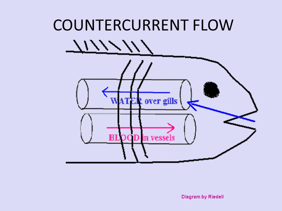 COUNTERCURRENT FLOW Diagram by Riedell