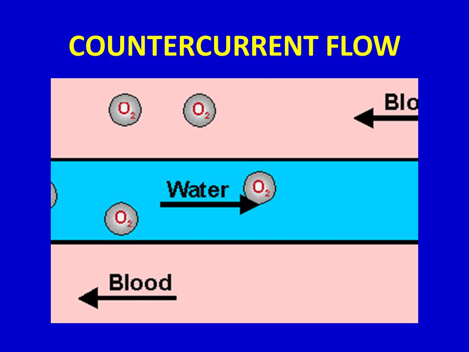 COUNTERCURRENT FLOW