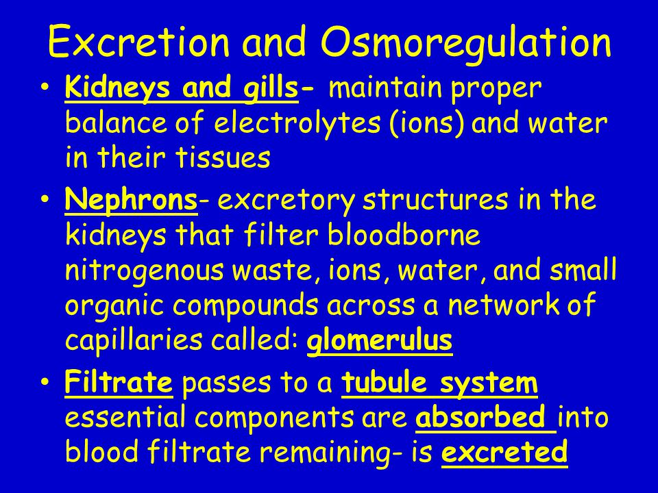 Excretion and Osmoregulation