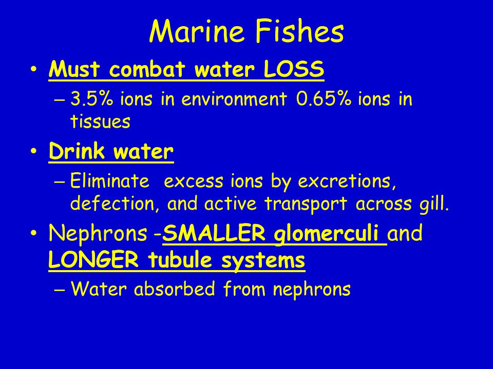 Marine Fishes Must combat water LOSS Drink water