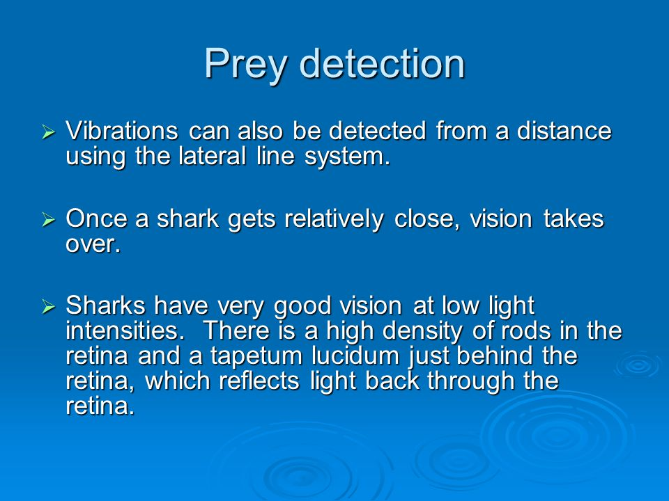 Prey detection Vibrations can also be detected from a distance using the lateral line system. Once a shark gets relatively close, vision takes over.