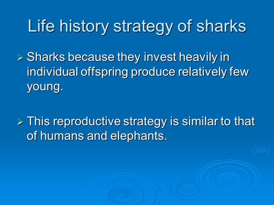 Life history strategy of sharks