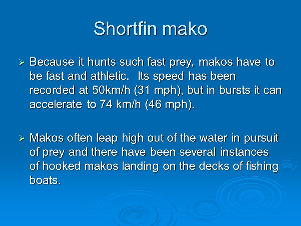 Shortfin mako