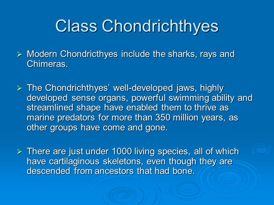Class Chondrichthyes Modern Chondricthyes include the sharks, rays and Chimeras.