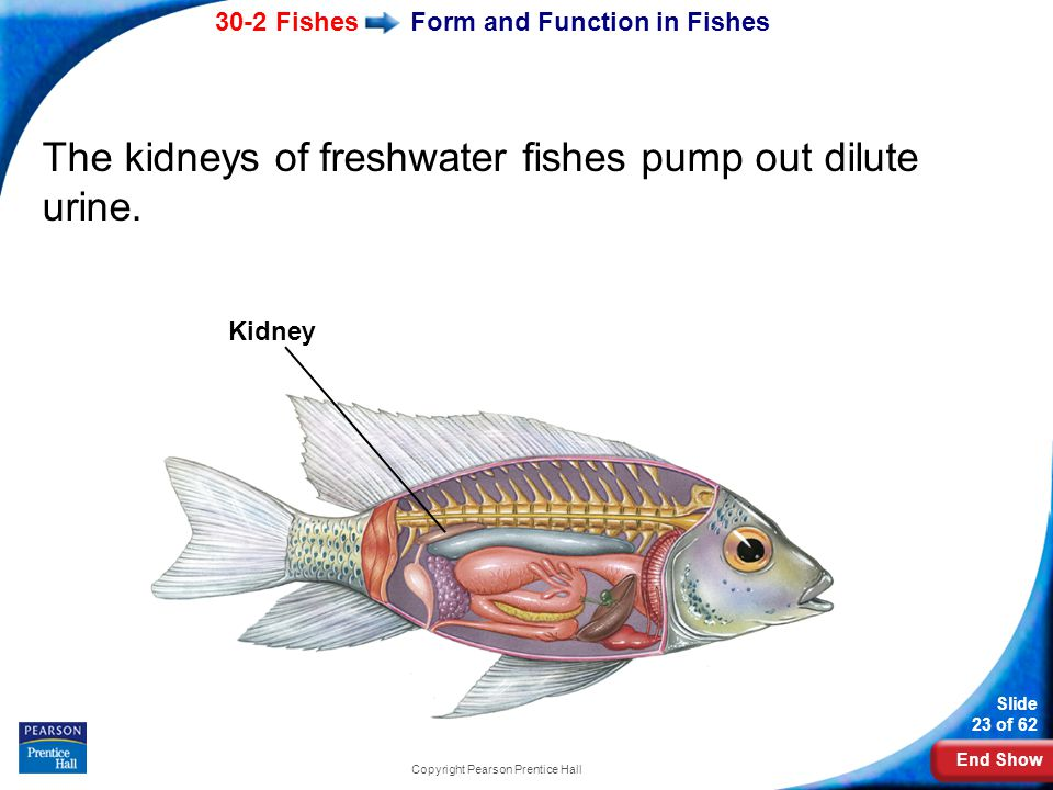 Form and Function in Fishes