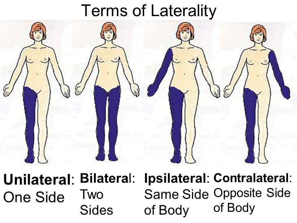 Terms of Laterality Unilateral: One Side Bilateral: Two Sides