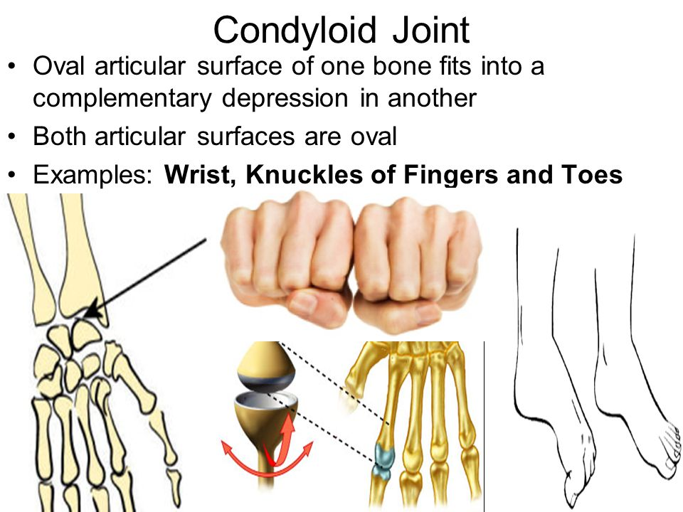 Condyloid Joint Oval articular surface of one bone fits into a complementary depression in another.