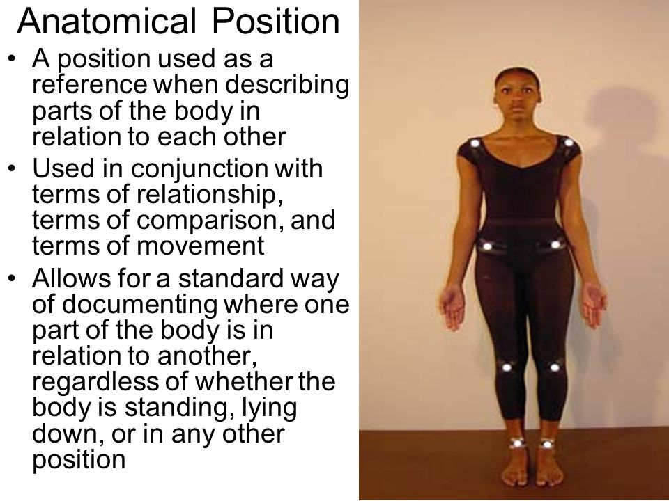 Anatomical Position A position used as a reference when describing parts of the body in relation to each other.