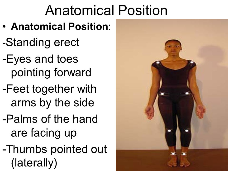 Anatomical Position -Eyes and toes pointing forward